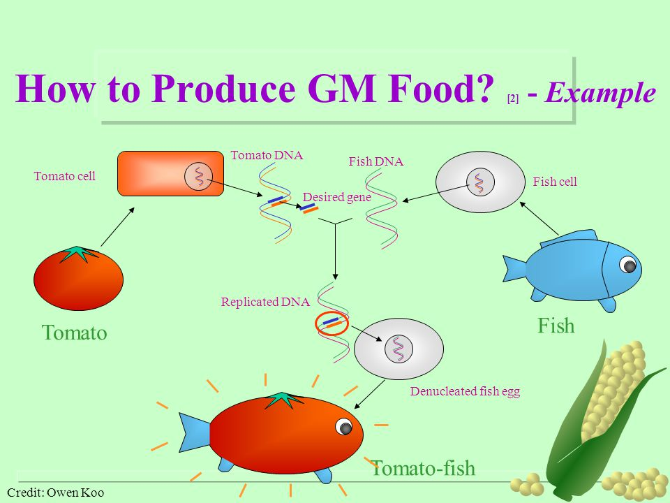 How to Produce GM Food [2] - Example